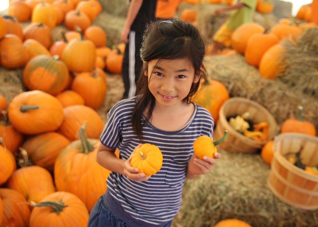 Join us at the Harvest Farm Fall Festival! 3